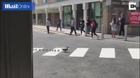 Video đàn vịt sang đường đúng vạch đi bộ ở Anh