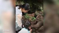 Clip con khỉ bất ngờ đấm thẳng mặt bé gái vì không được cho ăn tiếp.