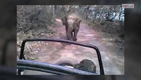 """Đứng tim cảnh voi """"điên"""" đuổi theo xe khách"""