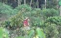 Hình ảnh người dân phá rừng làm nương rẫy