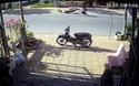 Thả chó chạy rông trên đường - Hiểm họa chết người