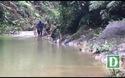 Cận cảnh vụ phá rừng phòng hộ tại Quảng Bình