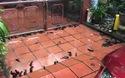 Video: Đàn cá rô hàng trăm con lúc nhúc trên sân nhà sau trận mưa lớn