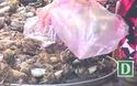 Sau Tết giá hải sản ở Phú Yên vẫn giữ mức cao