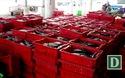 Cận cảnh thu mua cá ngừ sọc dưa ở Nha Trang