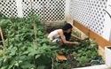 Thủy Tiên khoe vườn rau xanh nhà ăn không hết, đem ra chợ bán được 190 nghìn