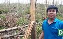 Cận cảnh những cánh rừng nguyên liệu bị bão số 10 tàn phá tan nát