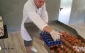 Cận cảnh máy tách lòng đỏ trứng với 500.000 nghìn quả/ngày