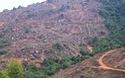 """Bình Định: """"Cạo trọc"""" rừng đầu nguồn để trồng rừng thay thế (?)"""