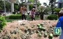 """Nhóm sinh viên Hà Nội """"giải cứu"""" dưa hấu ế giúp nông dân Quảng Ngãi"""