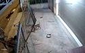 Những kẻ trộm chó dùng súng đe dọa chủ nhà khi bị phát hiện