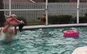 Tổng hợp những khoảnh khắc hài hước bên bể bơi