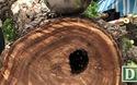 Bất ngờ phát hiện tổ ong lớn trong cây cổ thụ bị đổ ở Sài Gòn