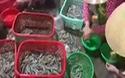 Một vụ bắt tôm tạp chất trên địa bàn tỉnh Bạc Liêu. (Nguồn: CTV).