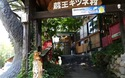 Đến thăm ngôi làng cáo ở Nhật Bản