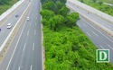 Cỏ dại um tùm suốt 24 km Đại lộ Thăng Long
