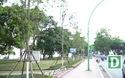 Bất ngờ với hình ảnh phong lá đỏ héo rũ tại Hà Nội