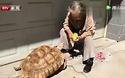 Bà cụ Trung Quốc nuôi rùa khổng lồ như thú cưng