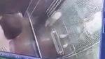 Clip: Nam thanh niên để chó phóng uế ngay trong thang máy chung cư. Nguồn: Facebook