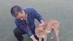 Video: Người đàn ông bén duyên với chó Phú Quốc hơn 30 năm