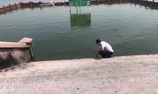 Chuyên gia Nhật Bản công bố kết quả thí điểm xử lý nước tại hồ Tây