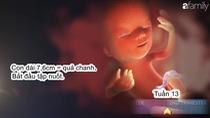 Sự phát triển của thai nhi trong tam cá nguyện thứ 2