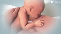 Cho con bú mẹ sau khi sinh