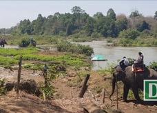 Du khách cưỡi voi vượt sông Sê-rê-pôk