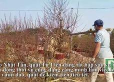 Lao động thời vụ kiếm tiền triệu mỗi ngày nhờ đào, quất