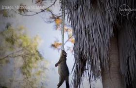 Thấy con chồn bị treo lủng lẳng trên cây, người đàn ông ngước lên xem mới tá hỏa nhận ra cảnh tượng kinh hoàng