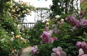 Khu vườn đẹp trên sân thượng của cô gái trẻ