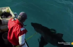 Quái vật bí ẩn ăn thịt cá mập trắng