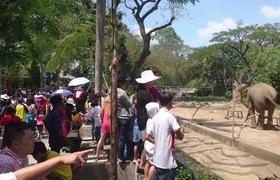 Thảo Cầm Viên đông nghịt, nhiều người Sài Gòn chen chân ngủ trưa tại các bãi cỏ.