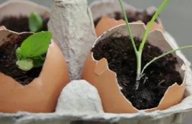 Trang trí nhà theo cách thông minh bằng cách tận dụng vỏ trứng để trồng cây cảnh