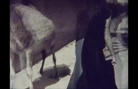 Kate Moss trong đoạn phim ngắn theo phong cách thời trang những năm 70