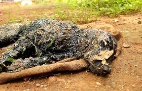 """Tai nạn bất ngờ biến chú chó thành """"đống bùn đen bất động"""" nhưng điều kỳ diệu đã xảy ra"""
