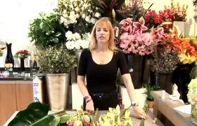 Cắm hoa trang trí căn nhà bạn với những loài hoa nhiệt đới
