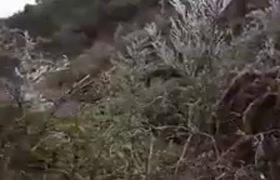 Video: Băng bám trên cành cây thuộc địa phận Pả Vi (Mèo Vạc - Hà Giang)