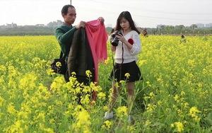 Cánh đồng hoa cải vàng đầu mùa