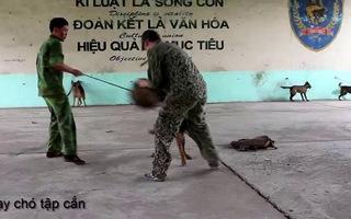 Quá trình huấn luyện chó nghiệp vụ dân sự.