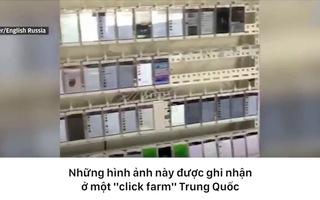 """Bên trong một trang trại trồng """"view"""" ở Trung Quốc."""