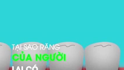 Tại sao con người có 32 chiếc răng?