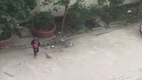 Clip người phụ nữ quét rác xuống cống