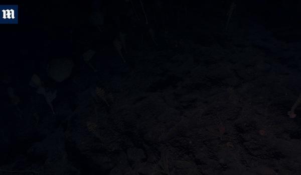 Không thể tin dưới đáy biển sâu 2000m có một khu rừng kỳ lạ thế này