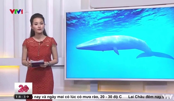 Hơn 100 bạn trẻ chết vì trào lưu 'Cá voi xanh' trên Facebook