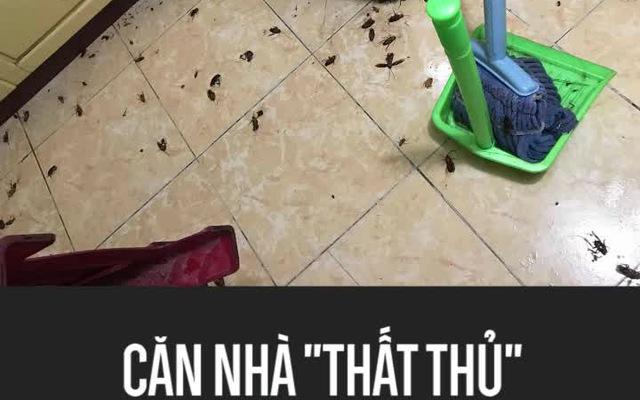 """Căn nhà """"thất thủ"""" vì bị gián tấn công sau mưa"""