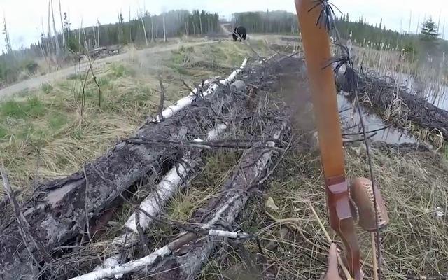 Có bị gấu đuổi cũng cố sống chết phải quay phim