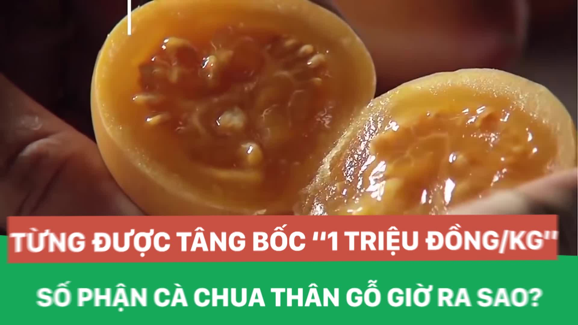 """Từng được tâng bốc """"1 triệu đồng/kg"""", số phận cà chua thân gỗ giờ ra sao?"""