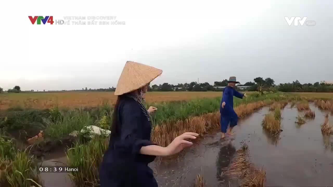 Vietnam Discovery: Visiting land of pink lotus