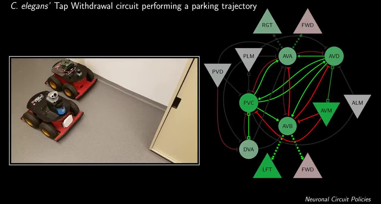 Trí thông minh của giun có thể tạo ra AI đỗ xe một cách hoàn hảo